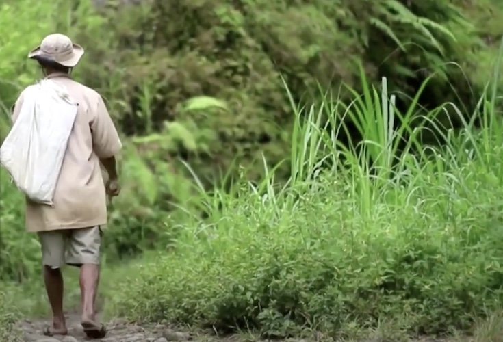 sadiman walking into his indonesian banyan forest