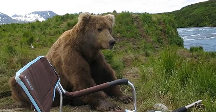 Drew Hammond bear video