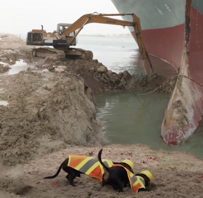 dachshunds digging