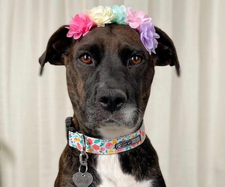 ginnie in flower crown