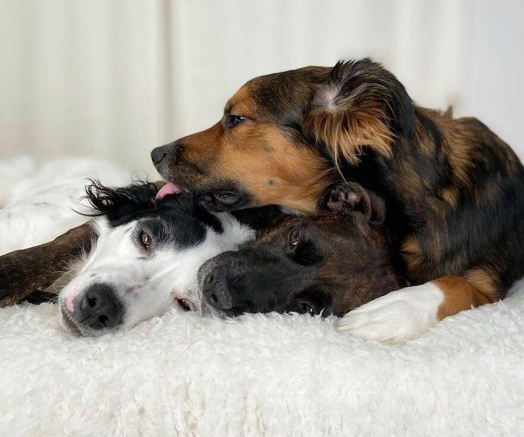 dogs cuddling