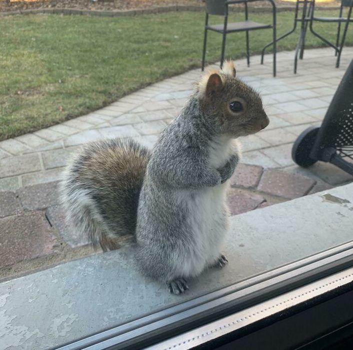 squirrel on a window sill