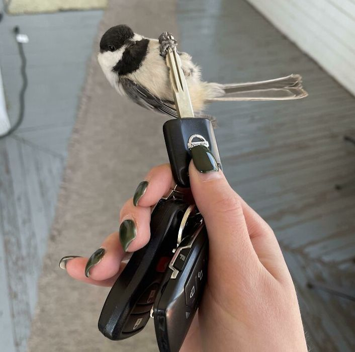 bird sitting on a key