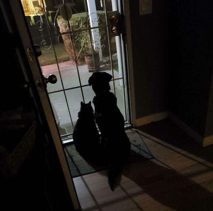 pets waiting for their owner