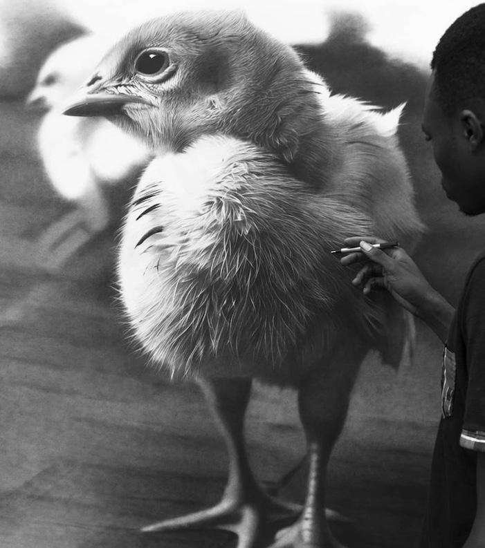 portrait of a chick