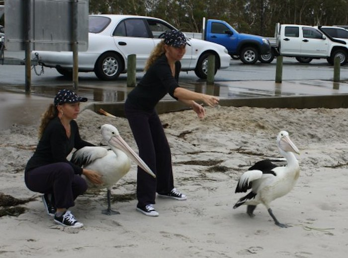 twins setting pelicans free