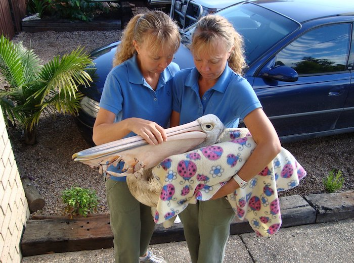twins holding injured pelican