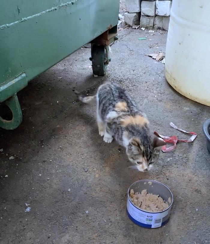 kitten eating outside