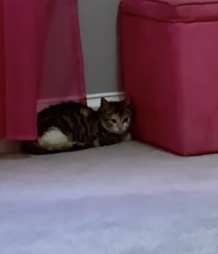 nervous kitten hiding