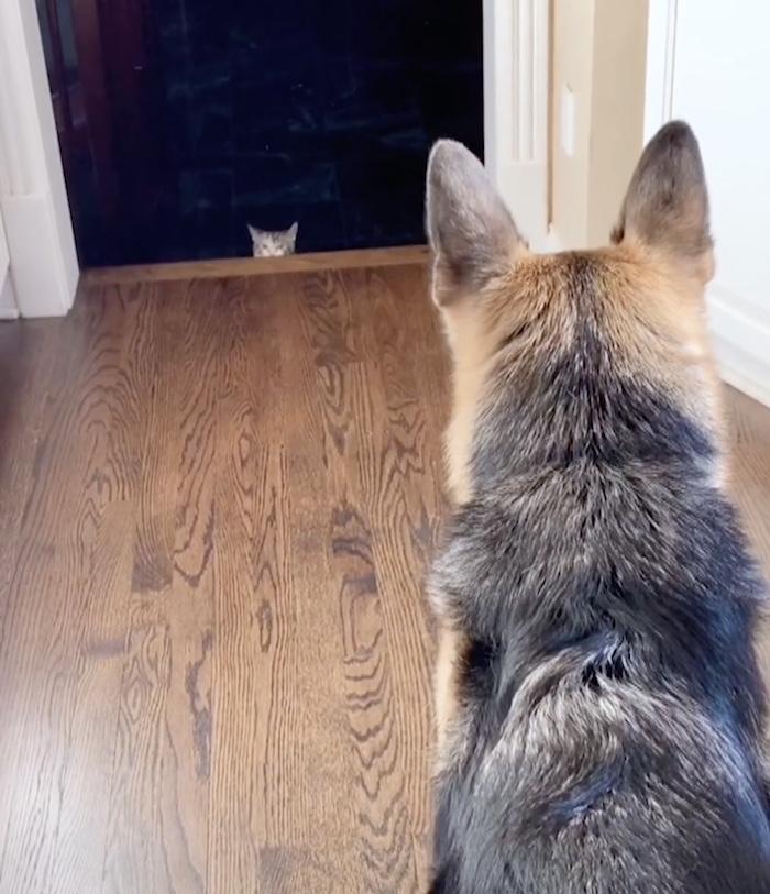 kitten hiding from dog