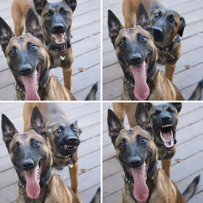 two dogs posing for camera