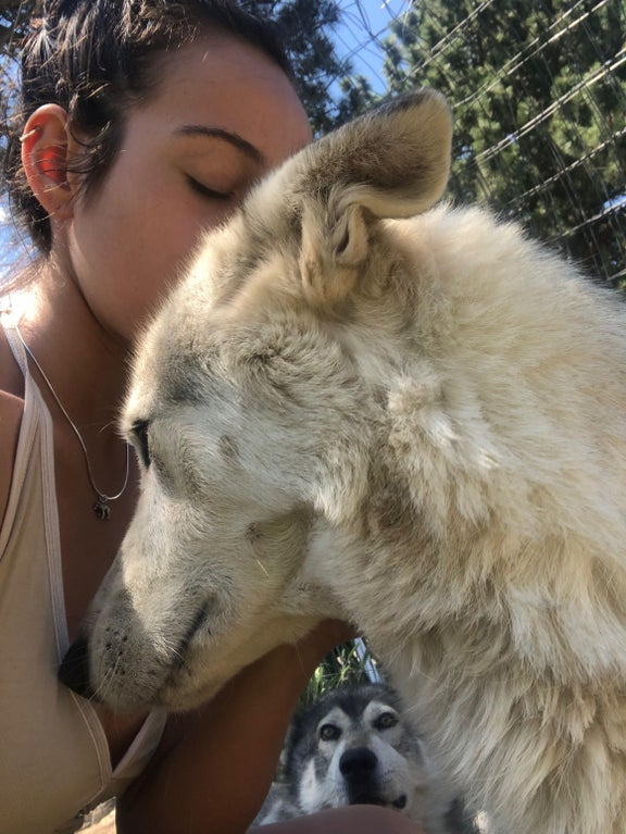 woman kissing dog's head with dog in background