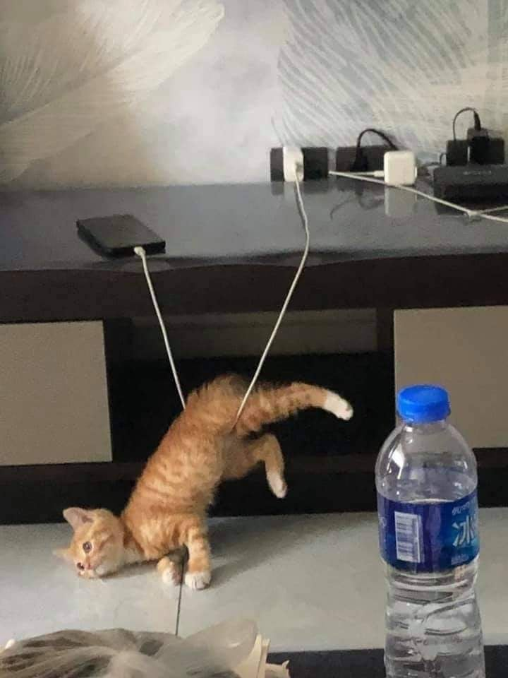 cat caught by phone charger cord
