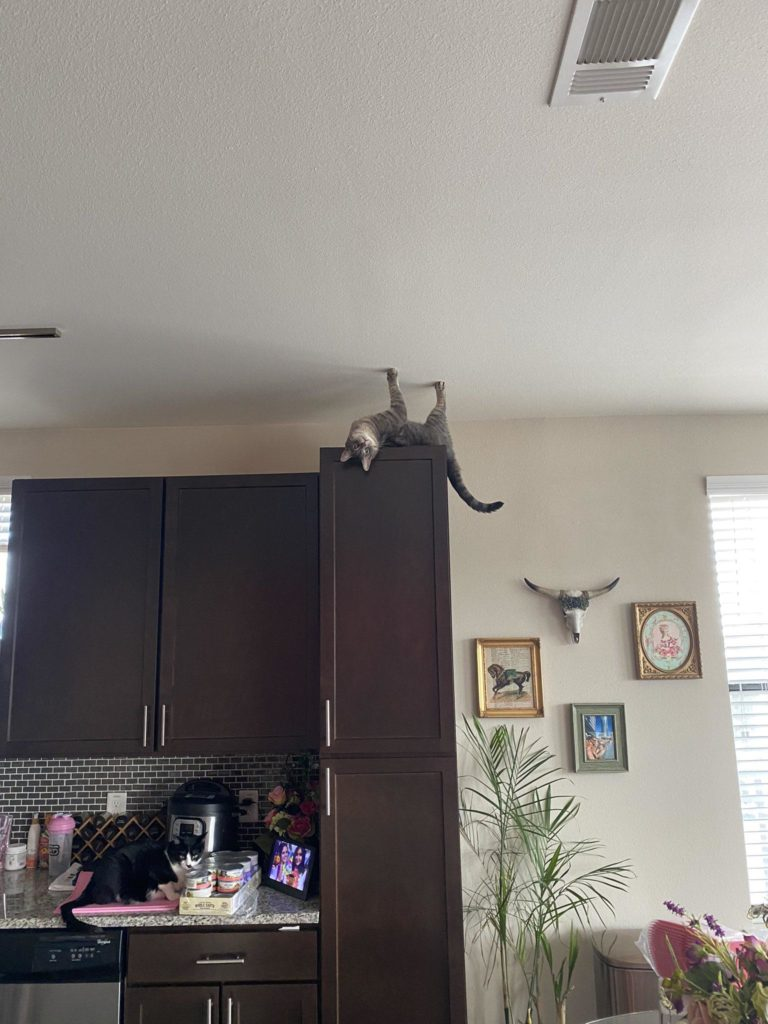 cat upside down on top of kitchen cabinet with another cat on counter