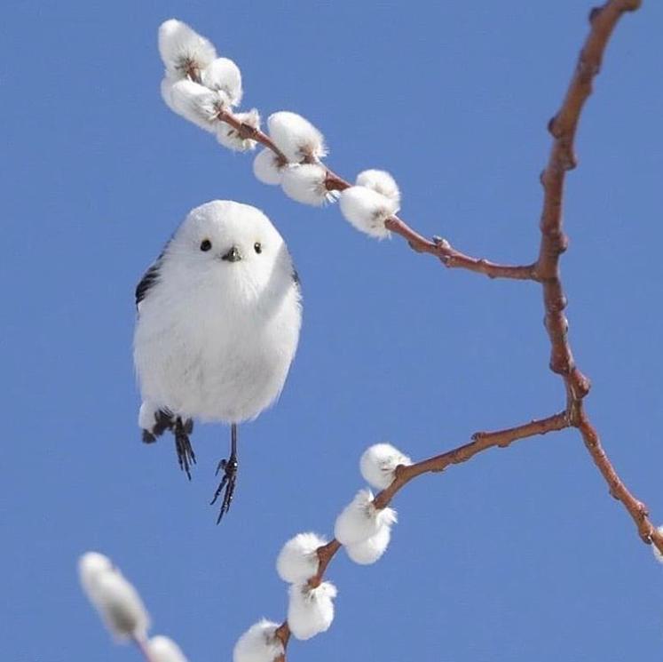 white puffy bird in the sky