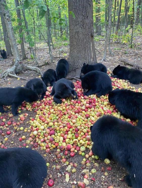 Photos Capturing Animals' Priceless Moments