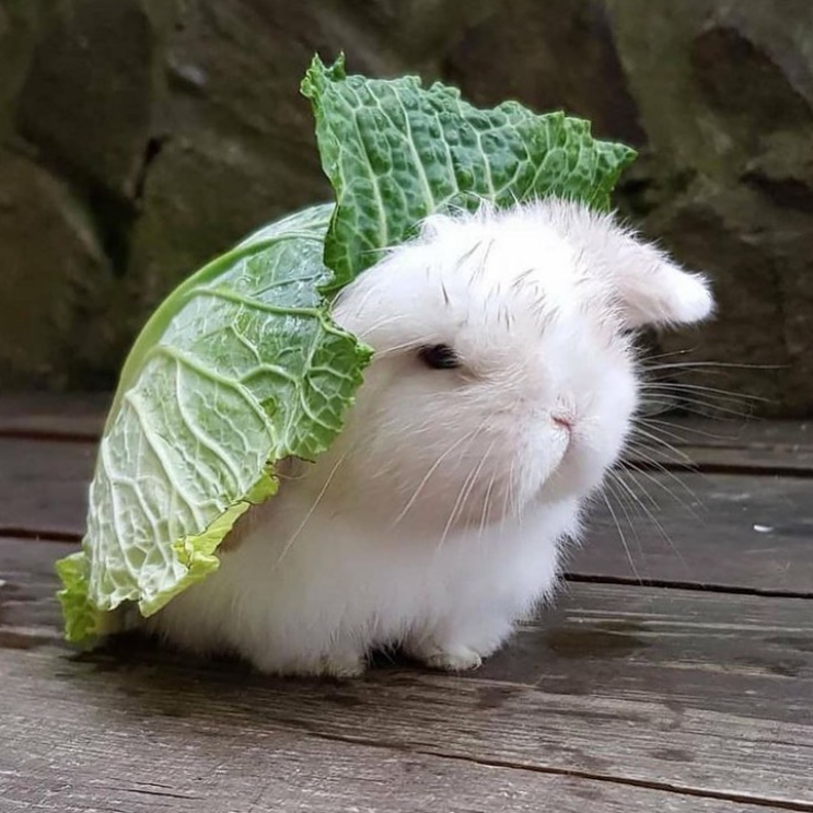 bunny with lettuce on back