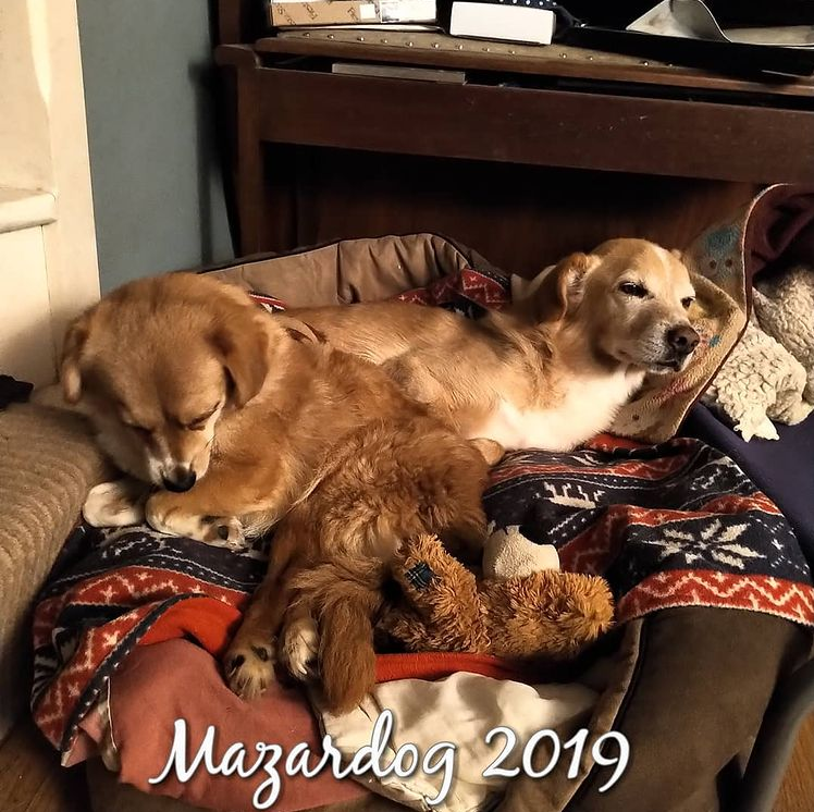 dogs lying on bed together
