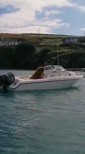 wally the walrus looking like he's driving a boat