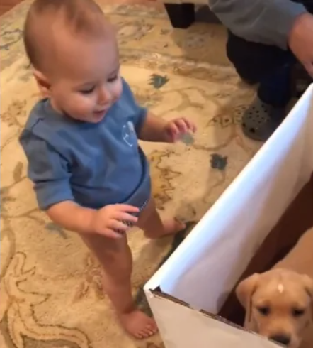 smiling baby approaching puppy in a box