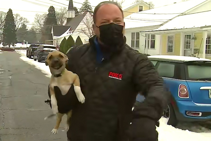 news reporter holding puppy