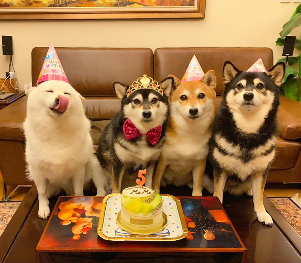 four dogs wearing birthday hats and posing with birthday cake