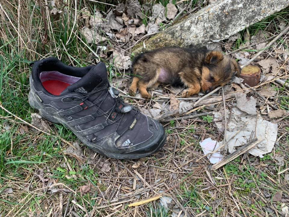 tiny puppy on the ground next to black hiking shoe