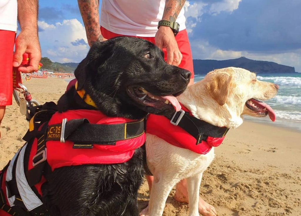 black and white lifeguard dogs wearing vests on beach