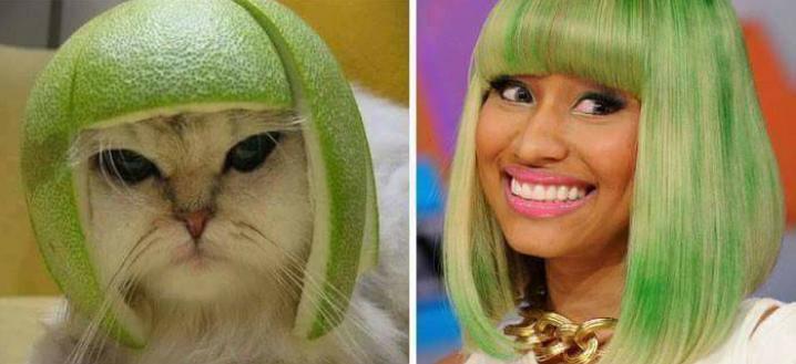 cat with melon on its head next to Nicki minaj