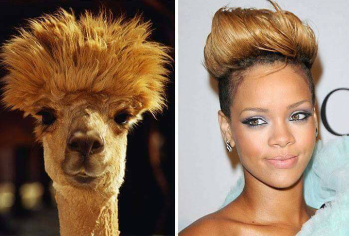 llama with swept up hair next to rihanna with swept up hair