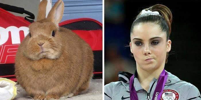 rabbit twitching its nose next to mckayla maroney twitching her nose