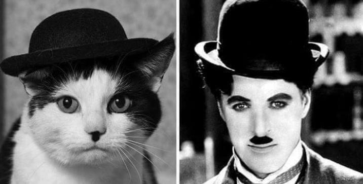 cat wearing hat next to charlie chaplin wearing hat