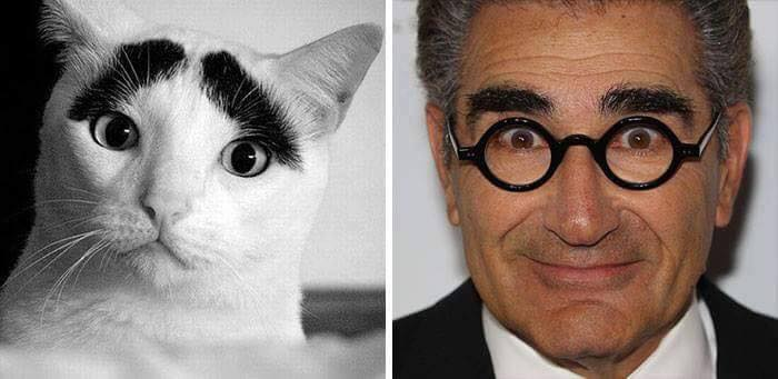 cat with thick eyebrows next to eugene levy