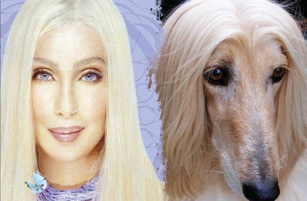 cher next to dog with same light blonde hair
