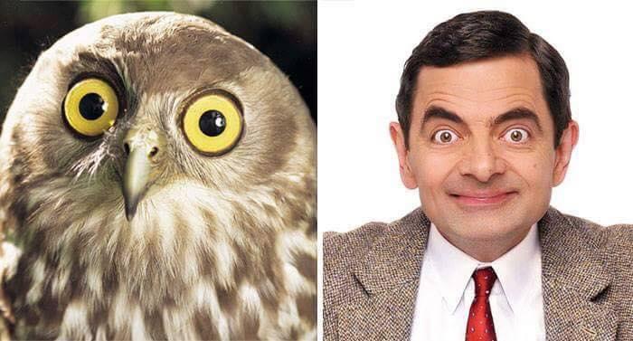 owl next to mr bean
