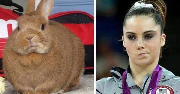 bunny twitching nose next to mckayla maroney twitching nose