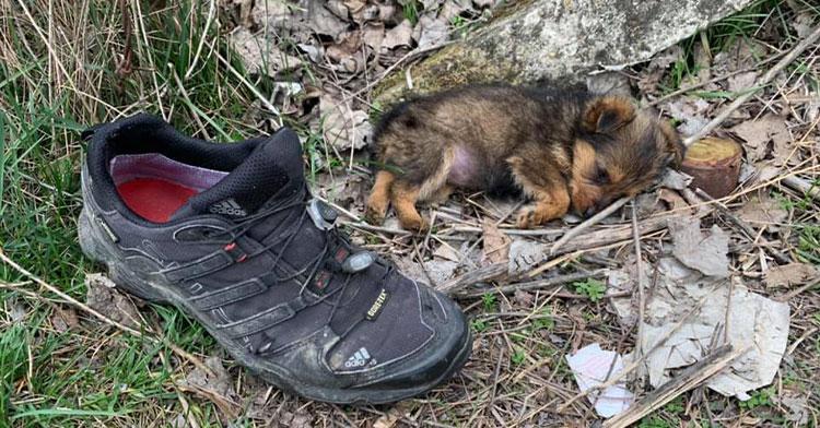 puppy on ground next to shoe