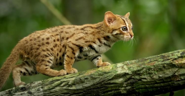 tiny cat walking on branch