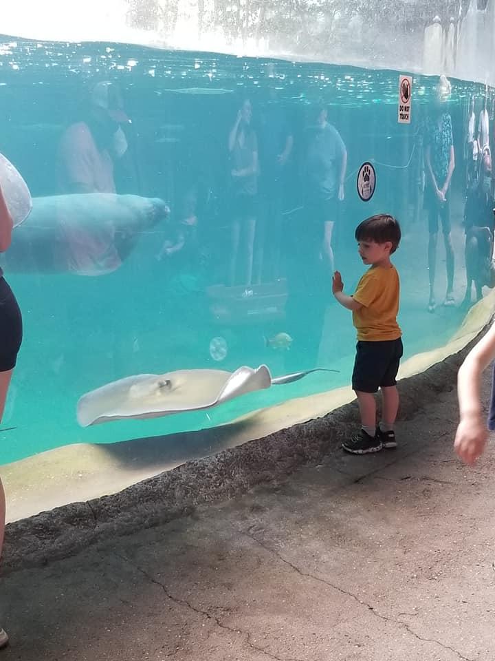 little boy looking at animals in an aquarium