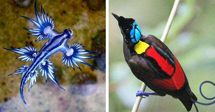 blue sea dragon next to bird of paradise