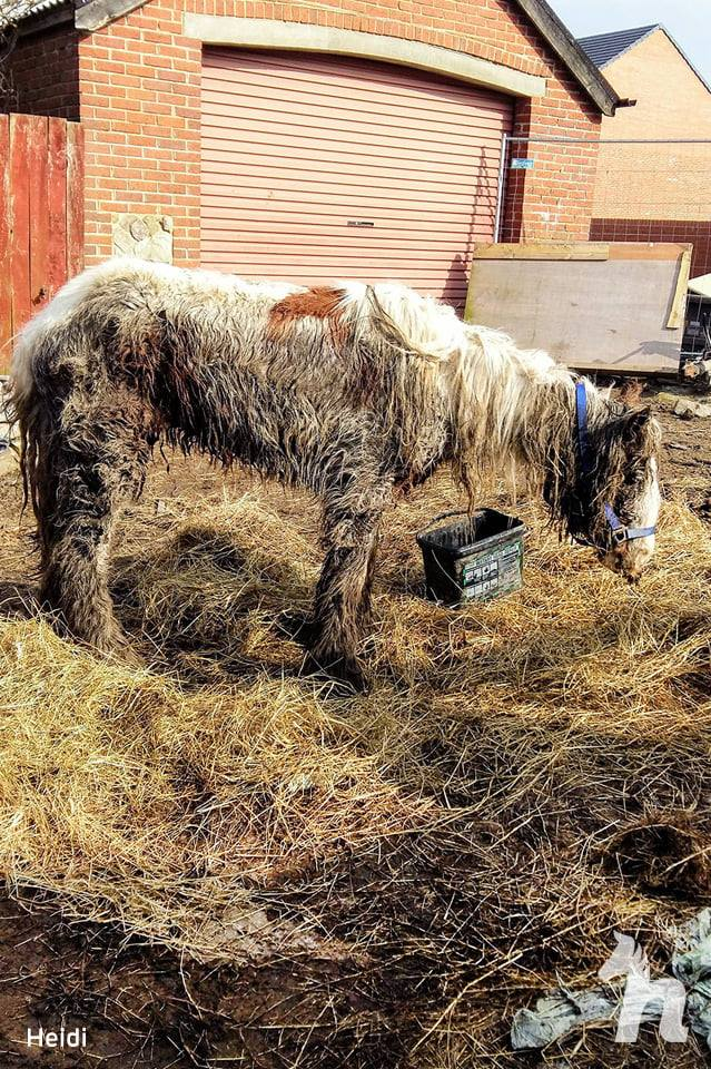 neglected pony covered in mud