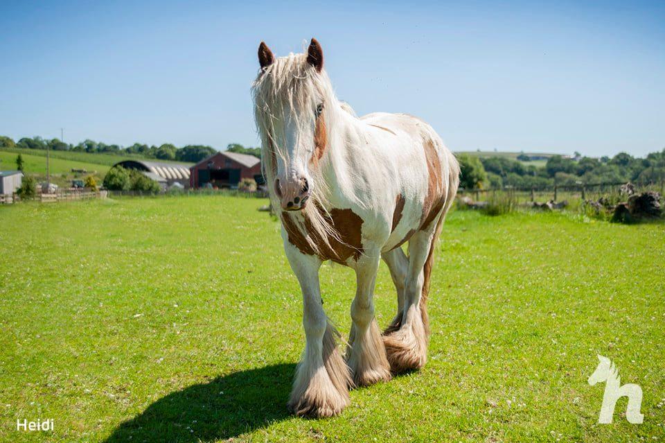healthy horse walking in field