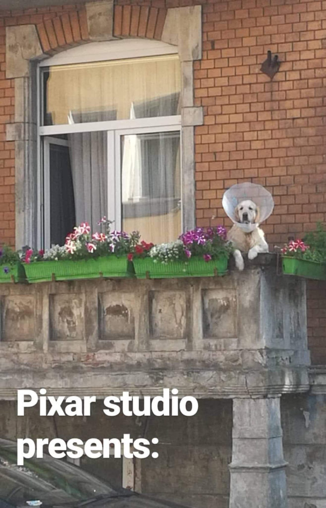 golden retriever looking over balcony while wearing a cone
