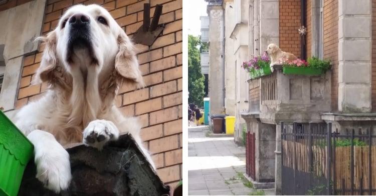 milka the balcony dog on her balcony