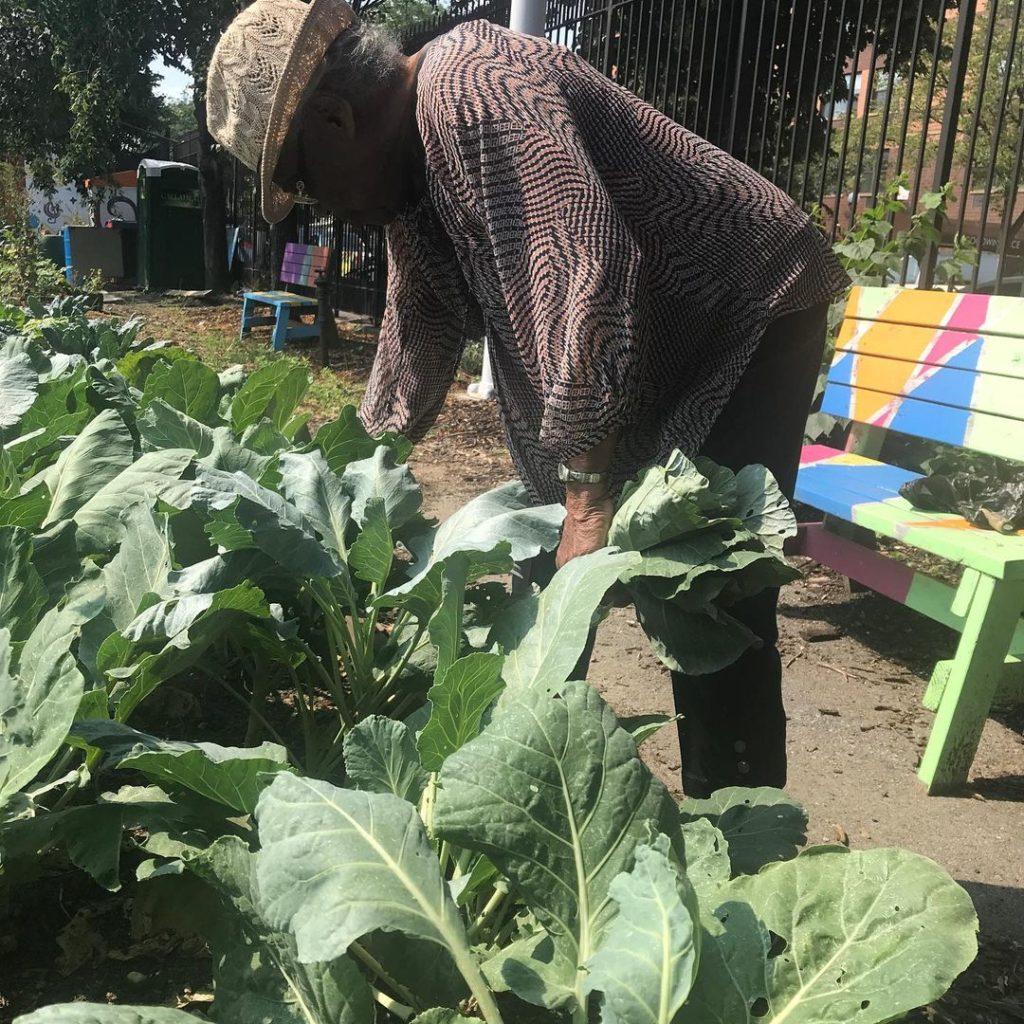 older woman gardening