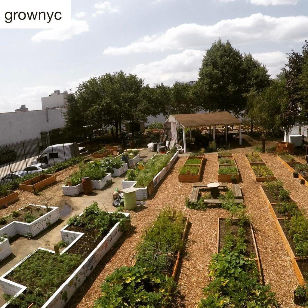 green gardening plots
