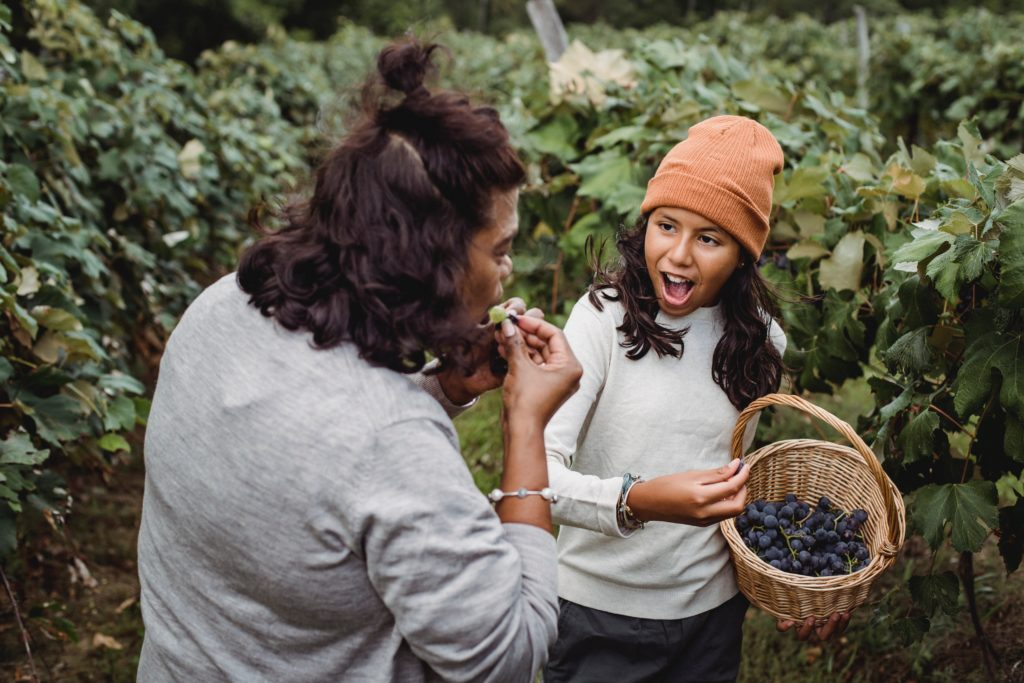 mom eating grape from daughter's basket of picked grapes in field