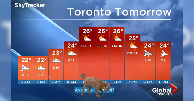 storm the dog in front of weather graph