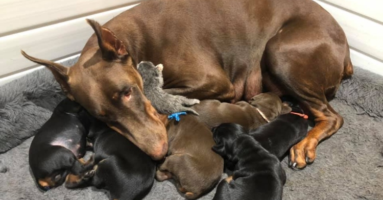 mama dog with puppies and kitten