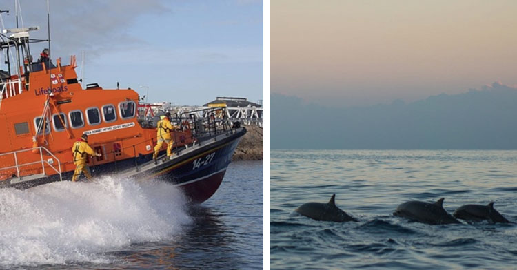 rescue boat next to pod of three dolphins in ocean